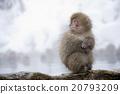온천 원숭이 20793209