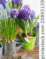 Gardening tools and flowers 20803139