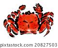 動物 甲殼動物 大閘蟹 20827503