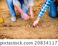 Close up of unrecognizable senior couple planting 20834117