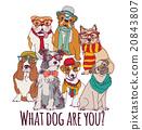 dog, vector, isolated 20843807