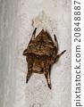 spider 20848887