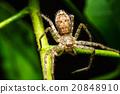 Spider on green leaf 20848910