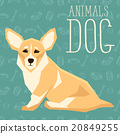 Vector Dogs Collection 20849255