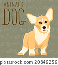 Vector Dogs Collection 20849259