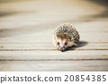 Small Funny Lovely Hedgehog Standing On Wooden 20854385