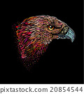 Hand-drawn Eagle 20854544