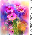 Watercolor painting pink cosmos flower 20863393