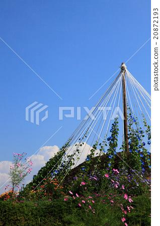 Blue morning glory of Furuta Minowa cho, Ina City 20872193