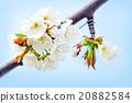 spring flowers 20882584