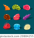 Vector Collection of Colorful Shells 20884255