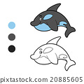 Coloring book, coloring page (killer whale) 20885605