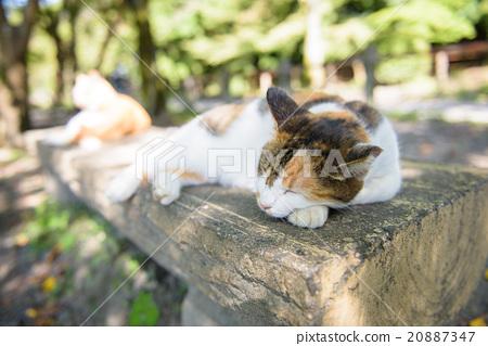 A cat of a cat 20887347