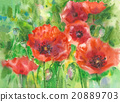 Red poppies. 20889703