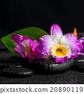 잎, 이파리, 잎사귀 20890119
