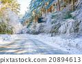 Road in winter , Japan 20894613
