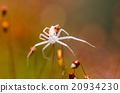 Spider in green nature background 20934230