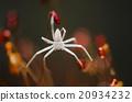 Spider in green nature background 20934232