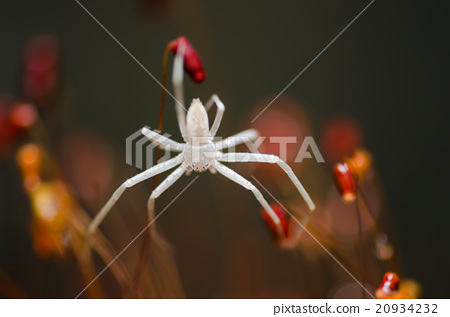 Spider in green nature background 20934232