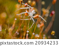 Spider in green nature background 20934233