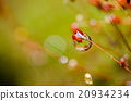 Grass moss and water drops 20934234