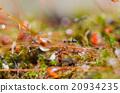 Ants 20934235