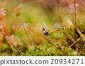 Ants 20934271