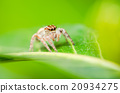 Spider in green leaf background 20934275