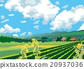 farm, paddy, field 20937036