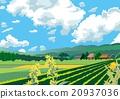 Early summer landscape 20937036