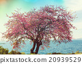 Blossoming tree 20939529