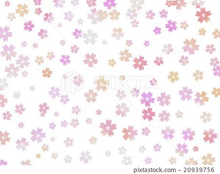 Cherry Blossoms 20939756