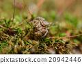 Spider in green nature background 20942446