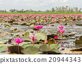 A vast lake full of water lilies of Talay Noi  20944343