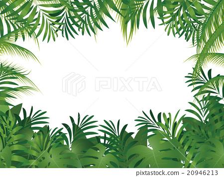 棕榈树 20946213