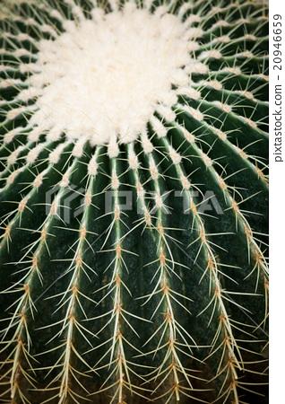Cactus spikes closeup 20946659