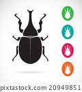 Vector image of stag beetle on white background 20949851