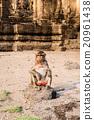 Thai monkey. 20961438