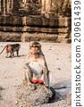 Thai monkey. 20961439