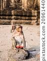 Thai monkey. 20961440