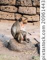 Thai monkey. 20961443