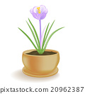 Spring flower in a flowerpot on white background. 20962387