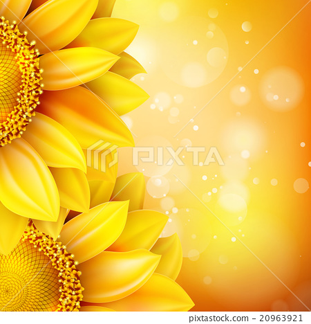 Stock Illustration: Macro SunFlower Background. EPS 10