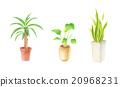 葉子植物 20968231