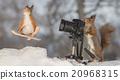 sport photographer 20968315