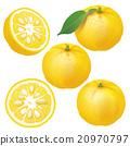 水果 檸檬 日本柚子 20970797