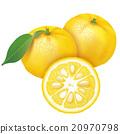 水果 檸檬 日本柚子 20970798