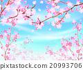 樱桃树 20993706