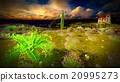 Castle towering 9ver lavender fields 20995273