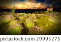 Castle towering 9ver lavender fields 20995275